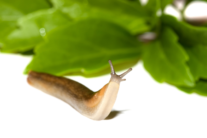 Organic Control Of Slugs And Aphids Debsjardin